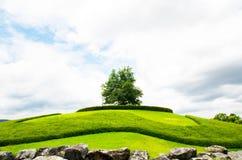 Utomhus- parkera kullar, gröna ängar och träd Royaltyfria Bilder