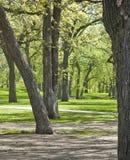 Utomhus- parkera med stora träd och picknicktabeller Arkivbild