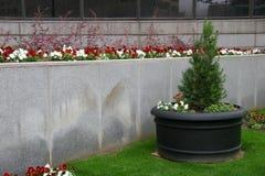 utomhus- planter Royaltyfri Fotografi