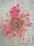 Utomhus- pootabstrect för natur Royaltyfria Foton