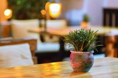 Utomhus- restaurang på nattljus Fotografering för Bildbyråer