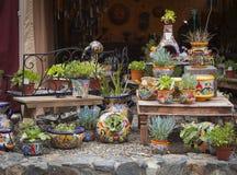Utomhus- shoppa av dekorativa krukor och suckulenter Arkivbild
