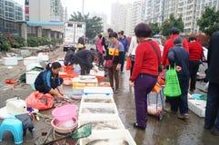 utomhus- skaldjur för marknad Arkivfoton