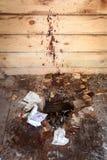Utomhus- smutsig toalett Royaltyfri Bild