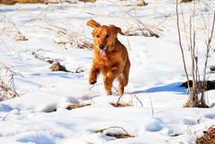 utomhus- snow för hund Arkivfoton