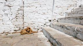 Utomhus- sova moment för hund nära och bakgrund för tegelstenvägg arkivbild
