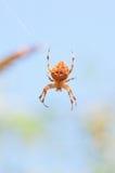 Utomhus- spindel Arkivfoton