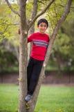 Utomhus- stående av lite pojken på ett träd royaltyfria bilder