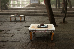 Utomhus- teacafe Arkivfoton