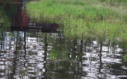 Utomhus träd, vatten, översvämning, gräs, gård, voljär, skjul royaltyfri bild
