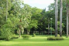 Utomhus- trädgård för abstrakt bakgrund Royaltyfri Fotografi