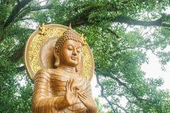 Utomhus- utsökt buddha bild med det jätte- trädet Royaltyfri Bild