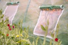Utomhus vädrar closeupen av fönster av det lilla växthuset för försiktigt Royaltyfri Bild