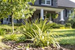 Utomhus- växt framme av hemmet Royaltyfria Foton
