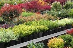 utomhus- växter som är till salu i växthusblomsterhandlaren Arkivbild
