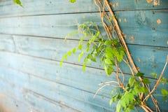 Utomhus- växtmurgröna Arkivbild