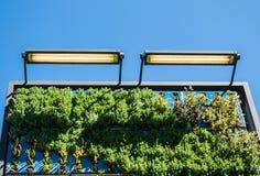 Utomhus- vertikal väggträdgård Royaltyfri Foto