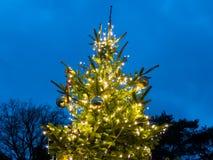 Utomhus- Xmas-träd på skymning fotografering för bildbyråer