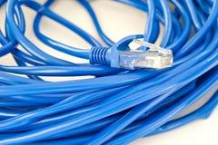 UTP网络缆绳 库存照片