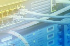 UTP Ethernetkablar Royaltyfri Bild