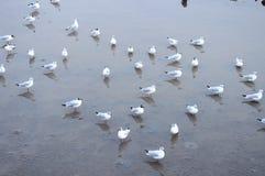 Utrymme av seagulls Arkivfoton