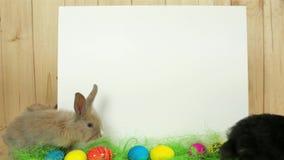 Utrymme för att dra, gulliga färgrika kaniner har gyckel, vit bakgrund för text, det easter symbolet lager videofilmer