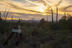 Utrzymanie Z Saguaro kaktusa pustyni przy zmierzchem Obraz Royalty Free