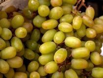 Utsökta gröna druvor som bildar en attraktiv textur royaltyfri bild