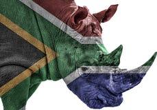Utsatt för fara noshörning i Sydafrika med söder - afrikansk flagga Royaltyfri Foto