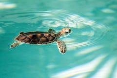 Utsatt för fara gulligt behandla som ett barn sköldpaddan Arkivbild