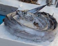 Utsatt medelhavs- fisk Royaltyfri Foto