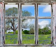 Utsikt för Texas bluebonnets till och med en gammal fönsterram Arkivfoton