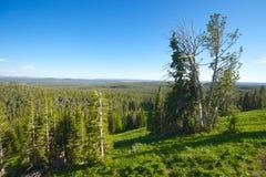 Utsikt i den Yellowstone nationalparken Arkivfoton