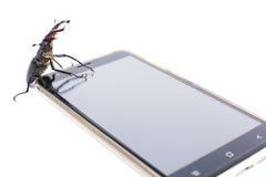 Utskjutande hjort sitter på en smartphone Royaltyfri Foto