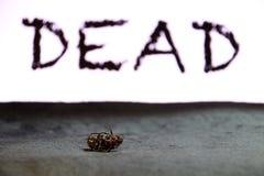 Utskjutande kryplögn som är liggande på det mörka golvet med svart DÖD text på bakgrund royaltyfri fotografi