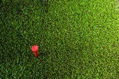 Utslagsplats på gräsplan Arkivbild