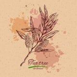Utslagsplatsträd och citron Dragen samling för vektor hand Naturliga örter och blommor Skönhet och Ayurveda organiska skönhetsmed stock illustrationer
