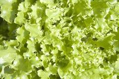 utsmyckad grönsallat Fotografering för Bildbyråer