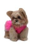 Utsmyckad hund i rosa färgklänning Arkivbild