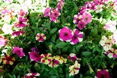 utsmyckade blommor Arkivfoto