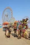 Utsmyckade kamel och ferrishjul på den Pushkar kamelmässan Arkivbild