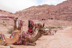 Utsmyckat & sadlade Colorfully kamel framme av den östliga Ridgen av kungliga gravvalv av Petra, JordanienUNESCOvärldsarv arkivfoton