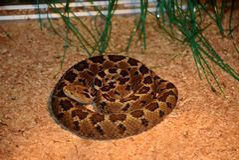Utställning av ormar arkivfoto