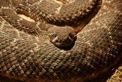 Utställning av ormar arkivbild