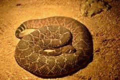 Utställning av ormar royaltyfria foton