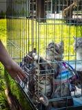 Utställningen av kattungar i en bur i en sommar parkerar för att söka efter värdar arkivbild