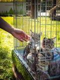 Utställningen av kattungar i en bur i en sommar parkerar för att söka efter värdar royaltyfri bild