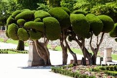 Utstående cypressträd i Retiro parkerar i Madrid, Spanien arkivbild
