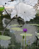 Utst?llning av exponeringsglaskonstn?ren Dale Chihuly i det Waterlily huset p? Kew tr?dg?rdar, Richmond, London, UK arkivbilder