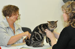 Utställningen av katter Royaltyfria Bilder